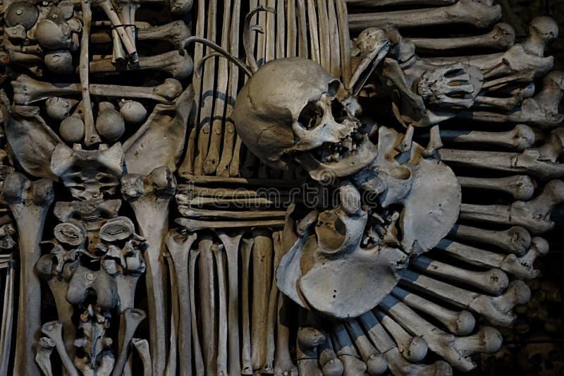 crânes photographie stock libre de droits
