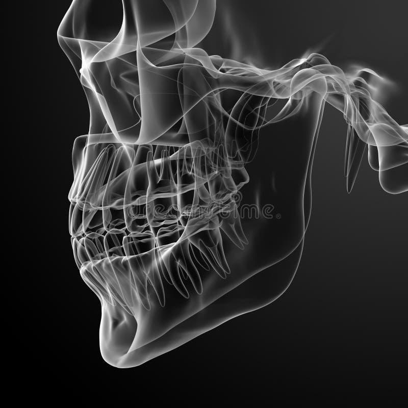 Crânio com dentes visíveis ilustração do vetor