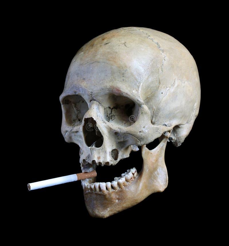Crânio com um cigarro. fotografia de stock royalty free