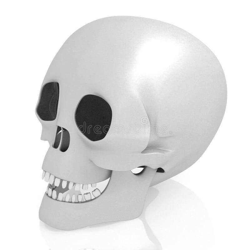 crânio 3D humano no fundo branco ilustração royalty free