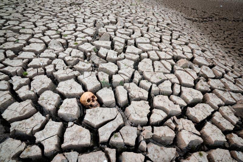 Crânio da cabeça da terra seca imagens de stock royalty free
