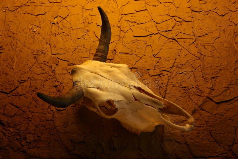 Crânio da vaca no deserto foto de stock