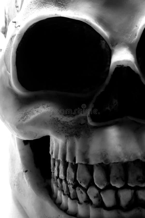 Crânio de Halloween fotos de stock