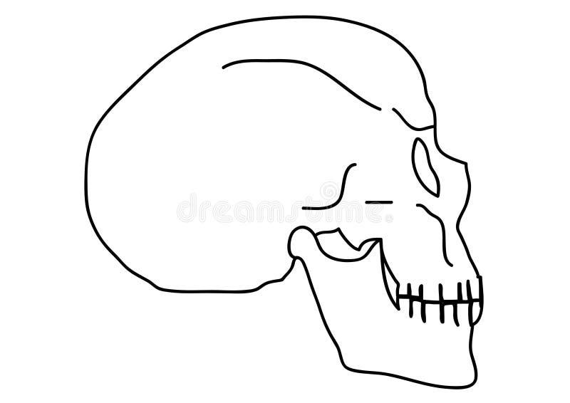 Crânio do esboço fotografia de stock