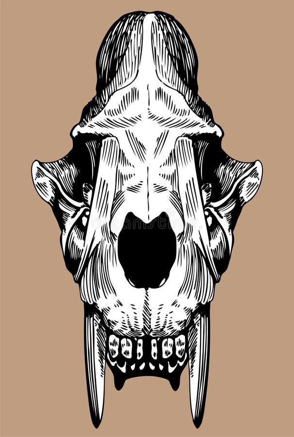 Crânio do gato do dente do Saber foto de stock