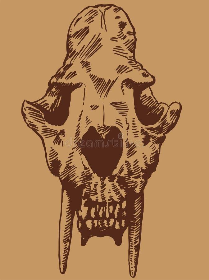 Crânio do gato do dente do Saber ilustração stock