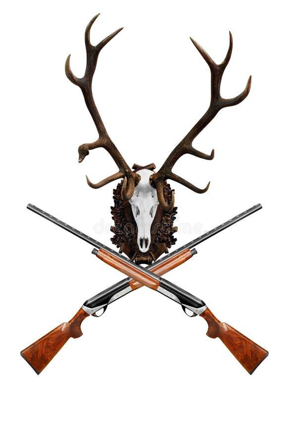 Crânio dos cervos com o troféu grande do chifre imagem de stock royalty free