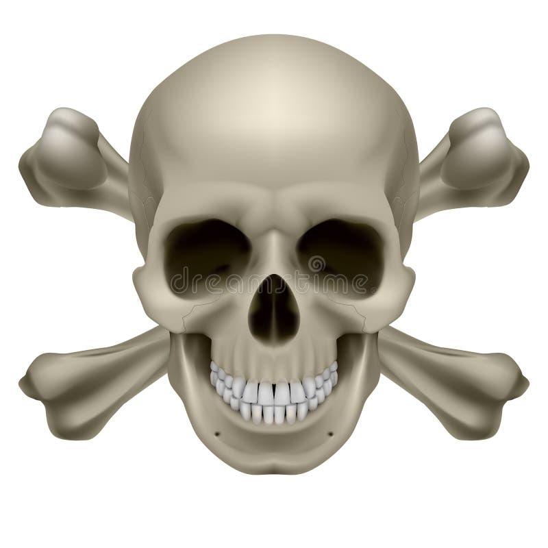 Crânio e ossos realísticos ilustração royalty free