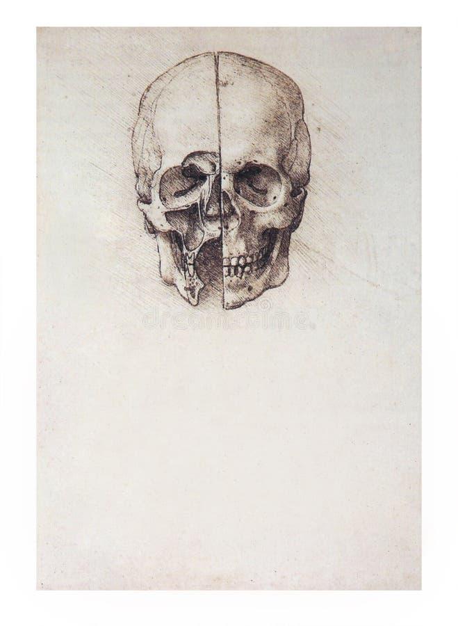 Crânio esboç ilustração do vetor