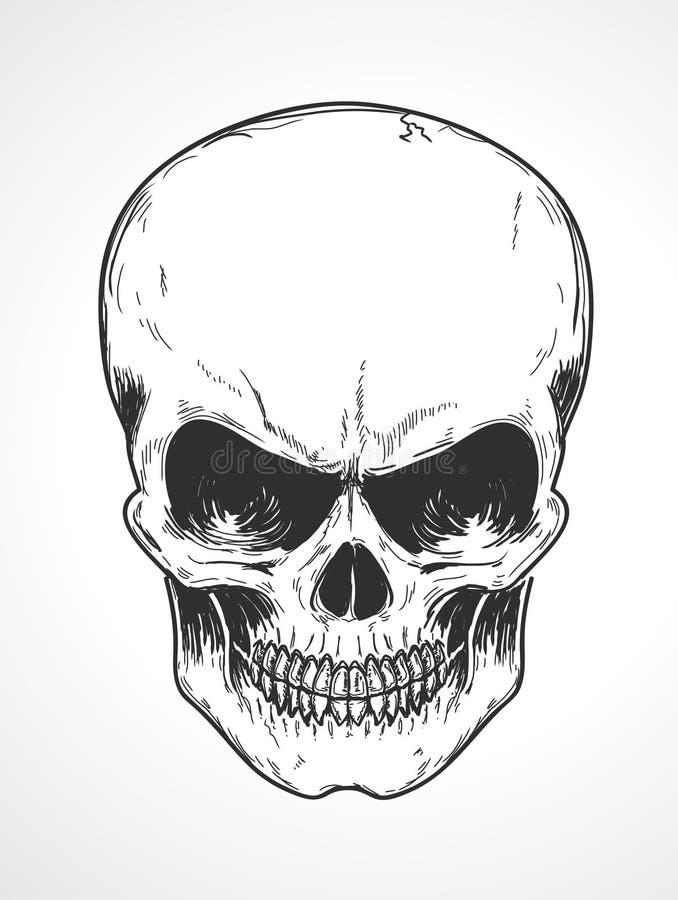 Crânio humano ilustração do vetor