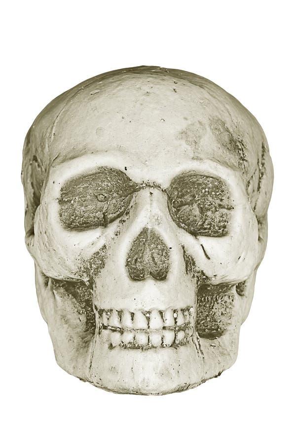 Crânio humano. imagem de stock royalty free