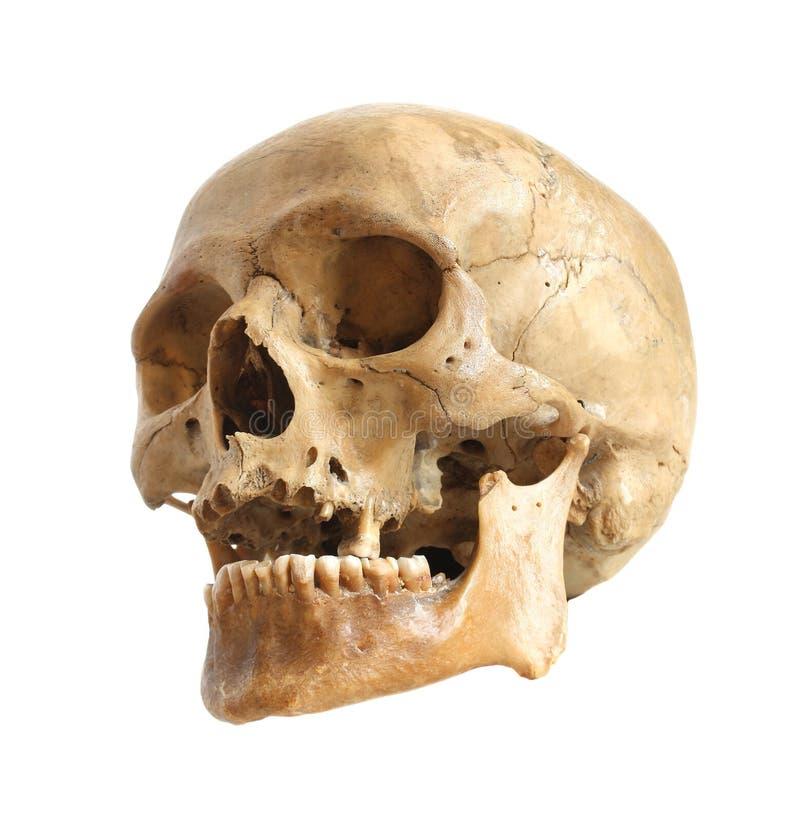 Crânio humano. fotografia de stock
