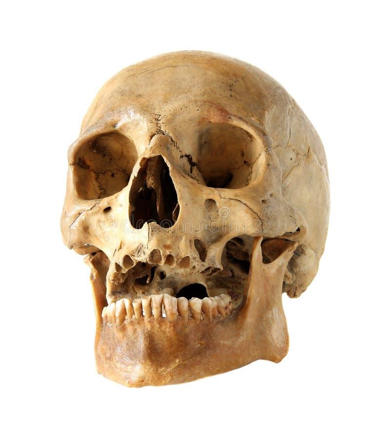 Crânio humano. imagens de stock