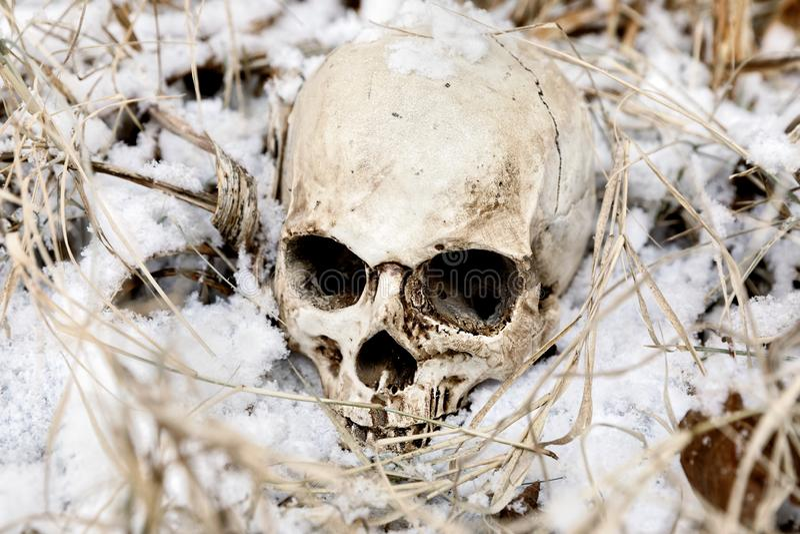 Crânio humano assustador na árvore foto de stock royalty free