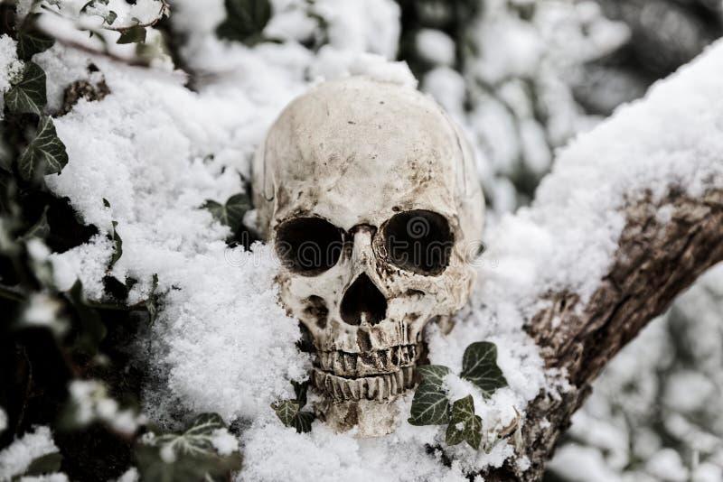 Crânio humano assustador na árvore imagem de stock royalty free