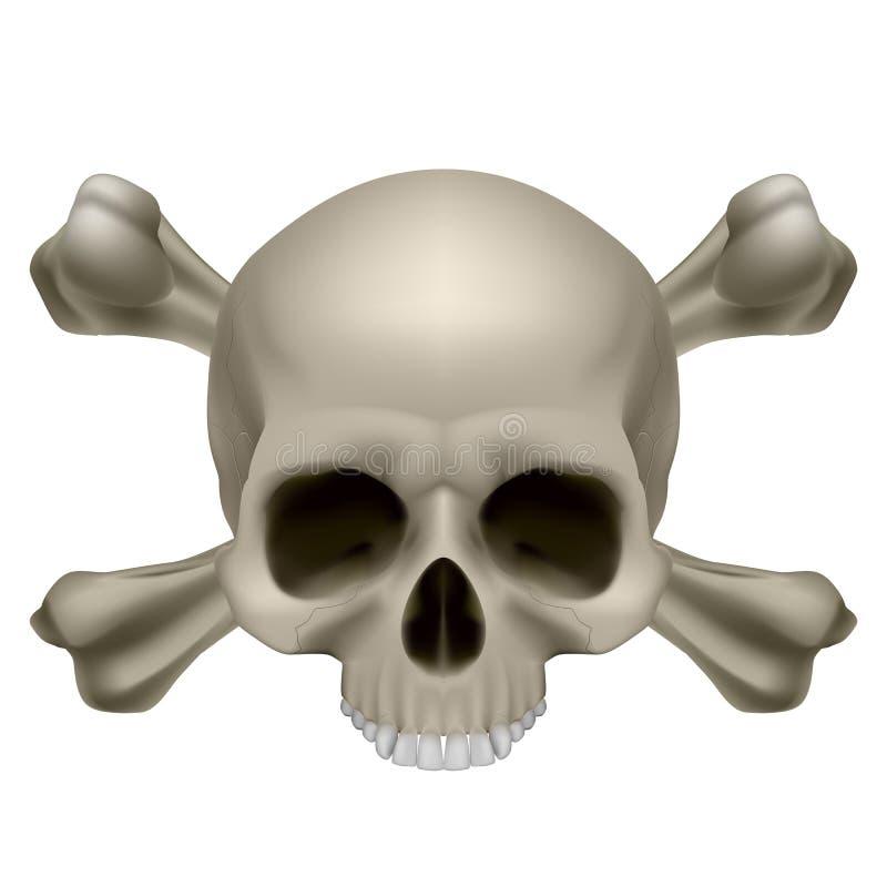 Crânio humano e crossbones ilustração royalty free