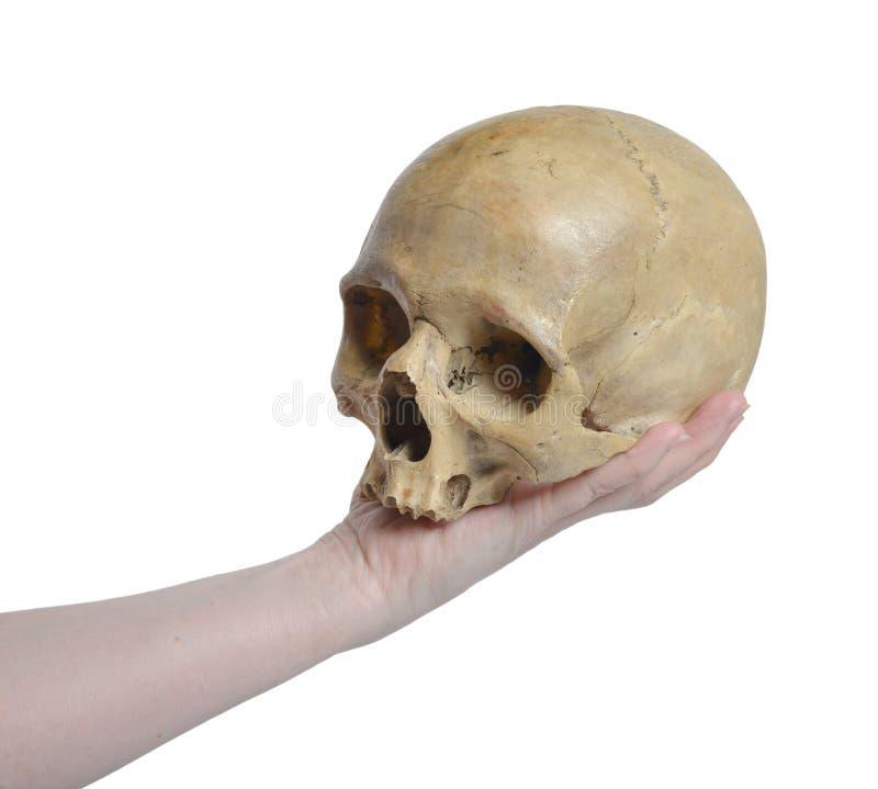 Crânio humano e mão fêmea imagem de stock