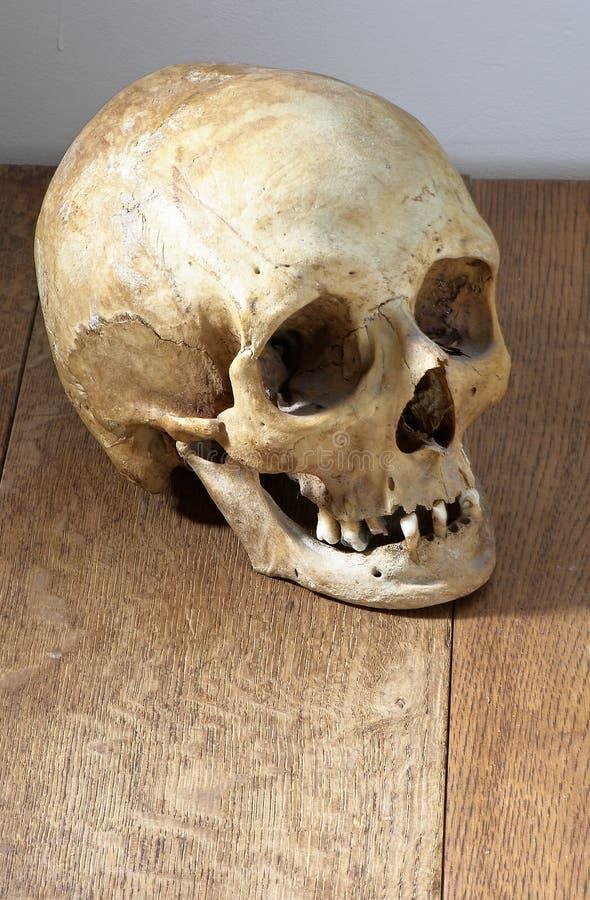 Crânio humano na madeira fotos de stock royalty free