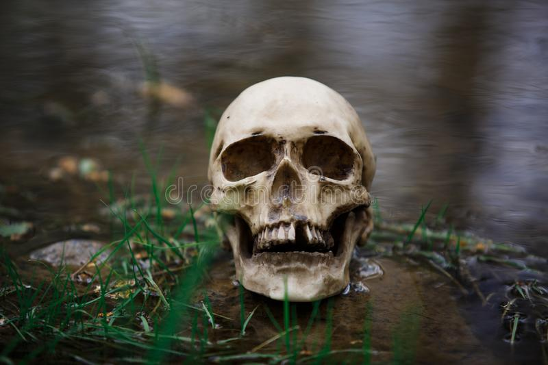 Crânio humano na superfície da água no rio entre a grama e as algas fotografia de stock