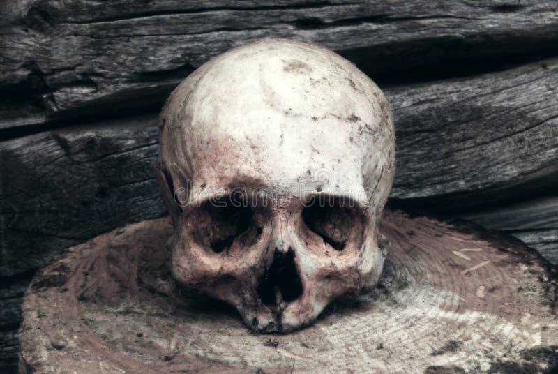 Crânio humano real no fundo de uma parede de madeira fotos de stock