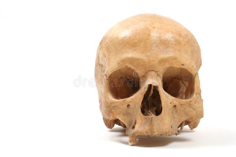 Crânio isolado imagem de stock royalty free