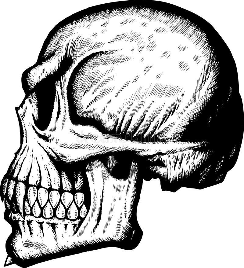 Crânio lateral assustador ilustração royalty free