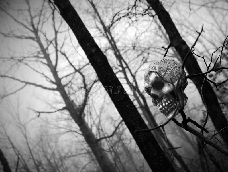 Crânio nas madeiras imagem de stock royalty free