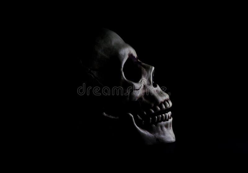 Crânio nas sombras imagem de stock