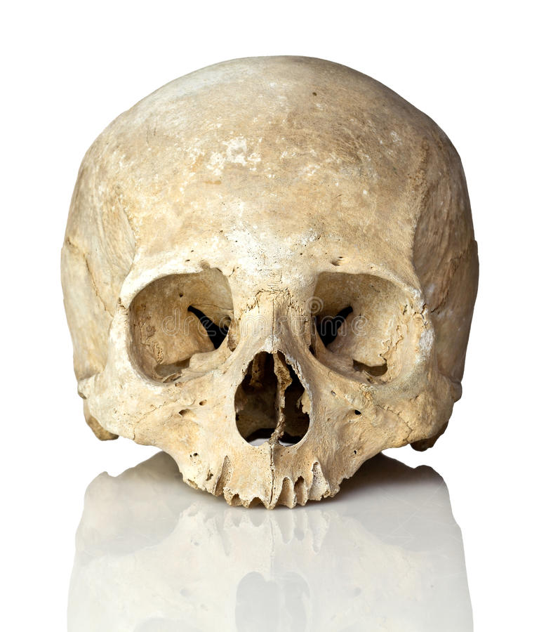 Crânio no branco imagens de stock royalty free