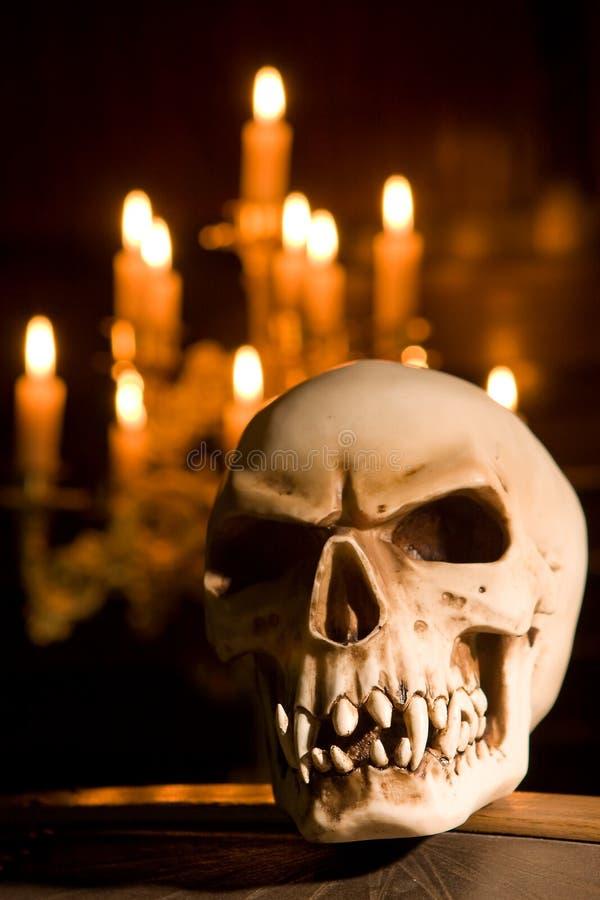 Crânio no caixão foto de stock royalty free