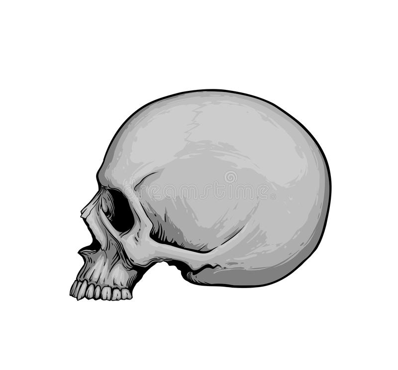 Crânio no perfil ilustração royalty free