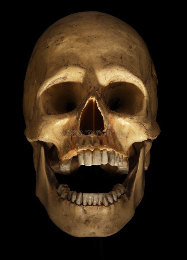 Crânio no preto fotografia de stock