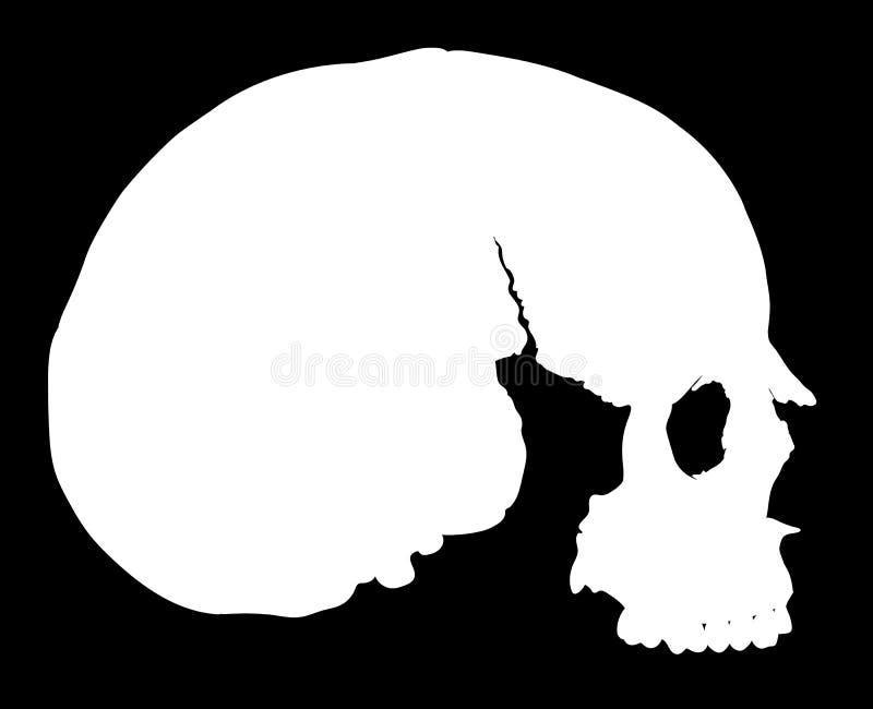 Crânio simples no perfil ilustração do vetor