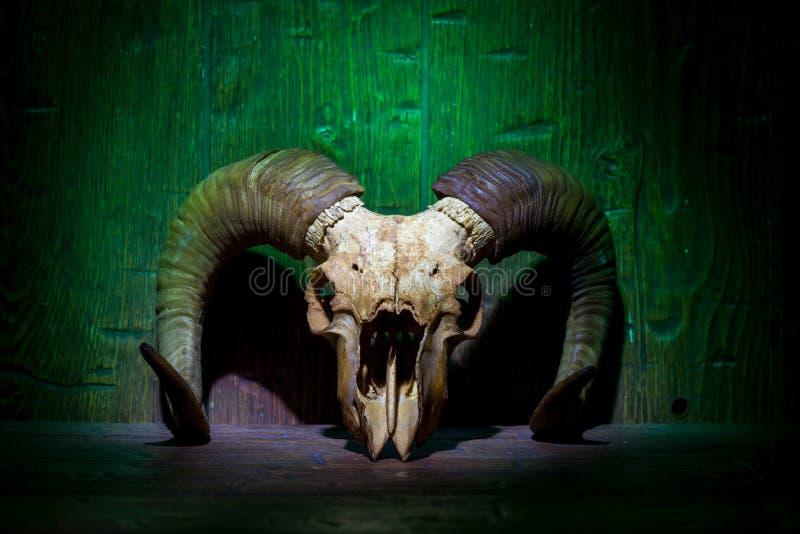 Crânio velho branco da ram na parede de madeira verde imagem de stock royalty free