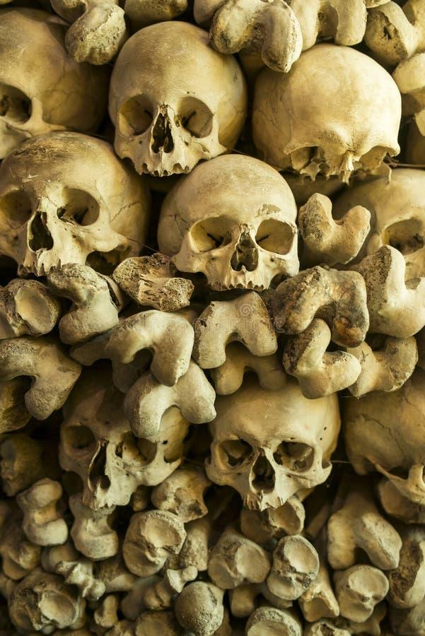 Crânios e ossos humanos fotografia de stock