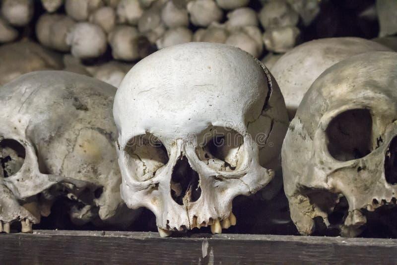 Crânios em shelfs de madeira velhos no fundo da parede dos ossos em um Dungeon antigo fotos de stock royalty free