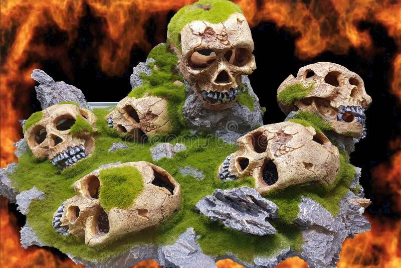 Crânios na frente da parede do fogo imagem de stock royalty free