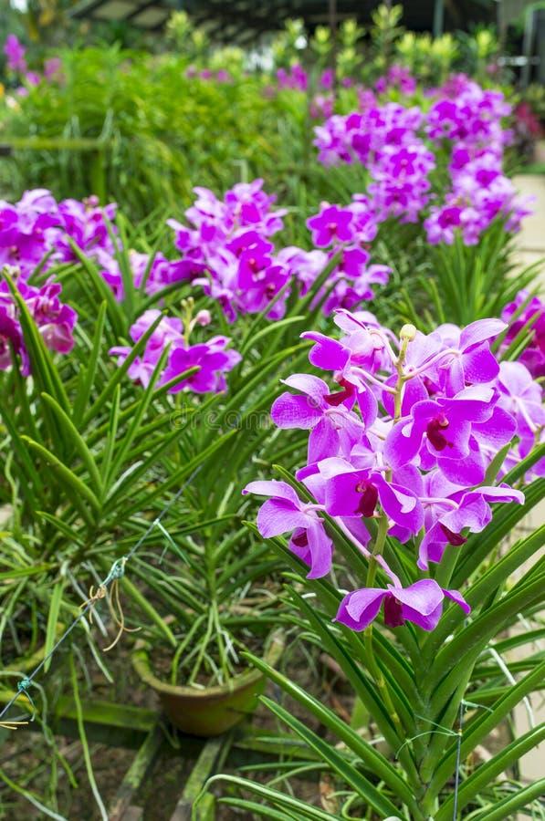 Crèche d'orchidée photographie stock