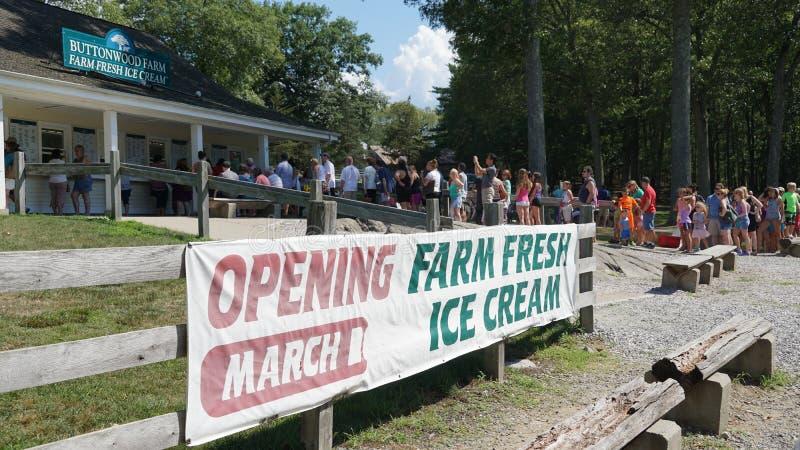 Crème glacée fraîche de ferme à la ferme de Buttonwood photographie stock libre de droits