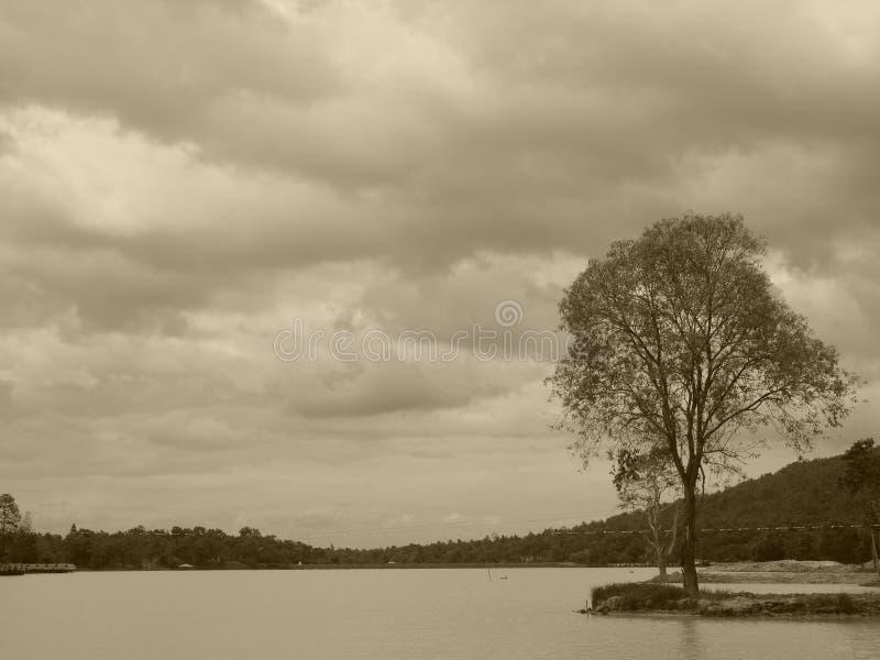 Création de nature photographie stock libre de droits