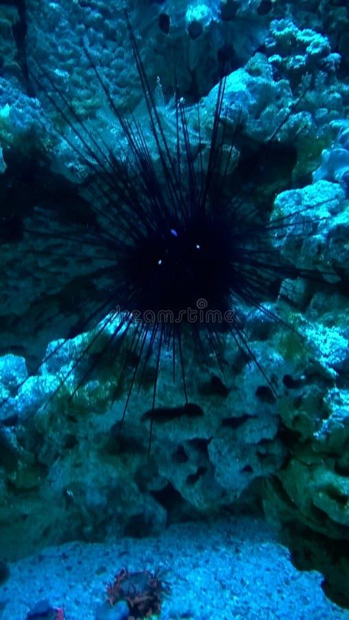 Créature d'océan image libre de droits