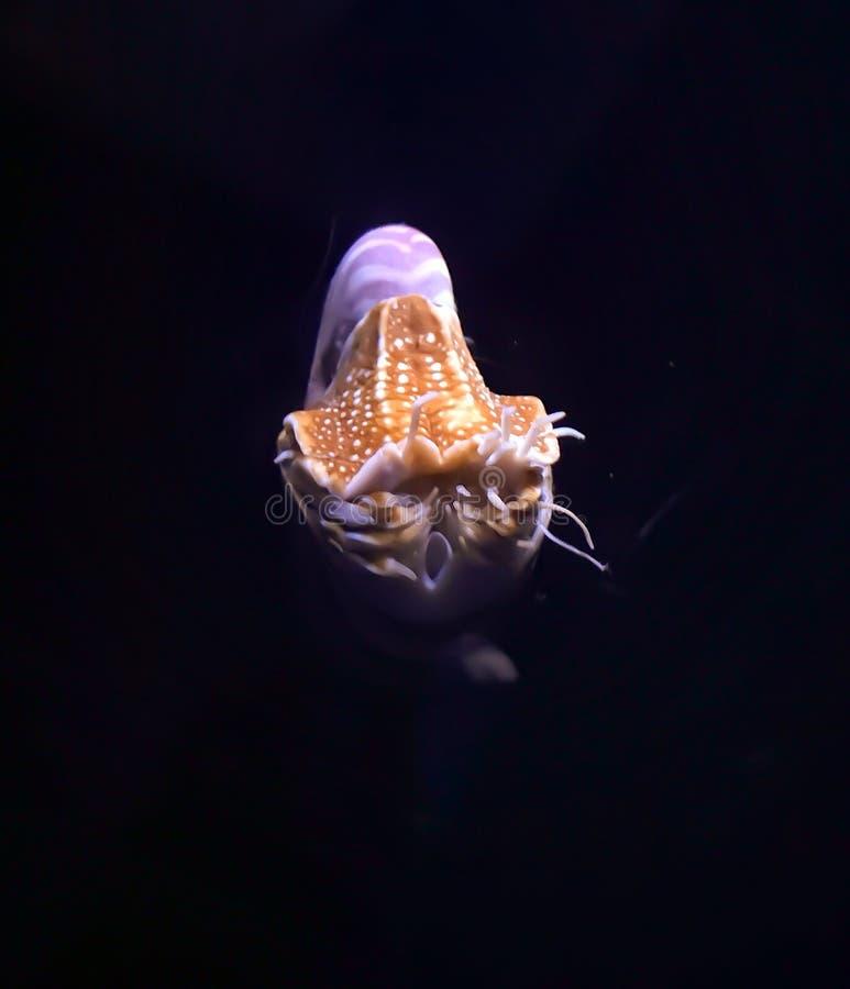 Créature de mer photo stock