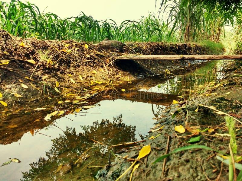 Créature fraîche de faune de temps de village agricole de l'eau images stock
