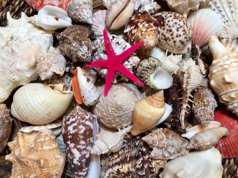 Créatures naturelles uniques sans couture de mer images libres de droits