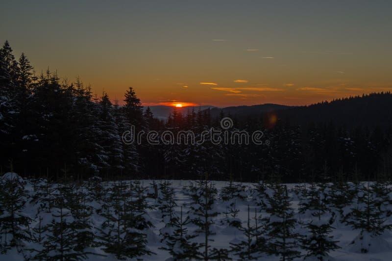 Crépuscule au-dessus d'une plantation de pin images stock