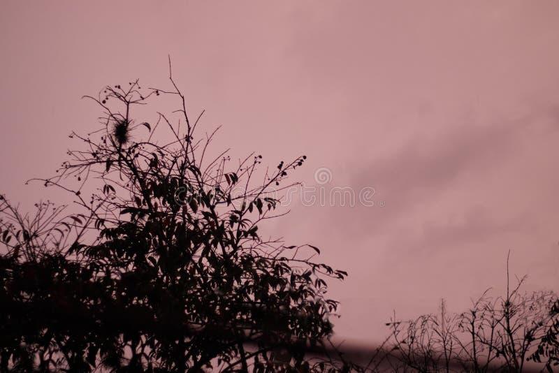 Crépuscule foncé de carmin avec la silhouette d'arbre image libre de droits