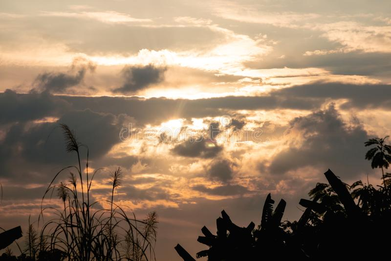 Crépuscule tropical de ciel d'arbre et d'or de silhouette Fond rural de vue de paysage photos stock
