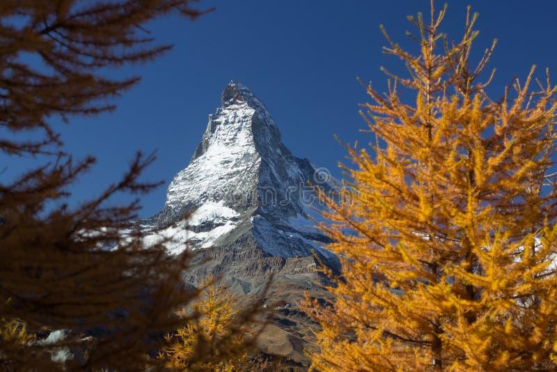 Crête de Matterhorn encadrée par les pins jaunes photographie stock