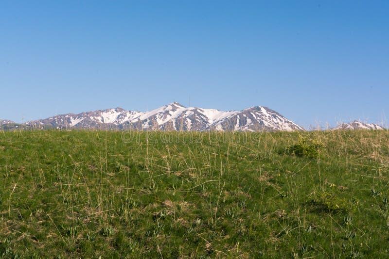Crête de neige de la montagne Côtes vertes Été Jour sans nuages photographie stock libre de droits