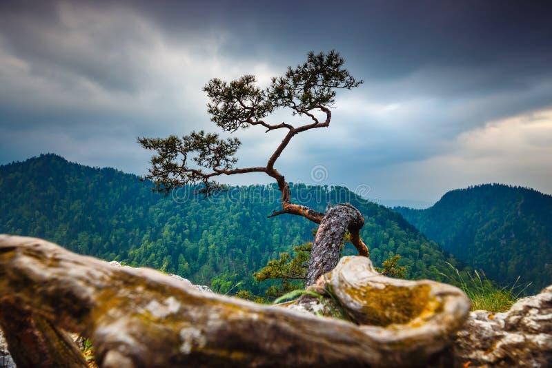 Crête de Sokolica en montagnes de Pieniny photo libre de droits